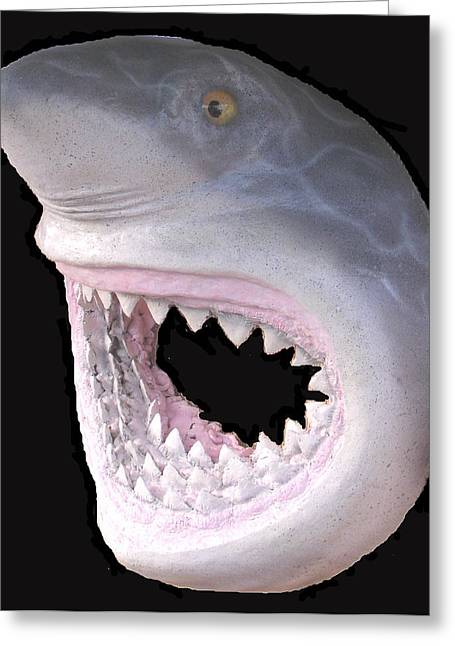 White Shark Mixed Media Greeting Cards - Mack the Shark Greeting Card by Dan Townsend