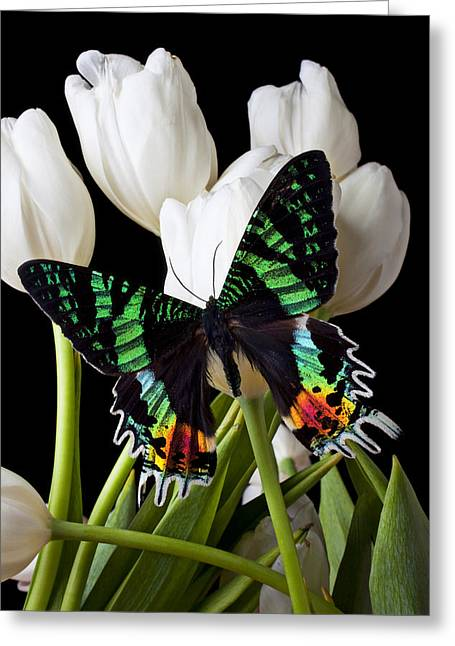 White Tulip Greeting Cards - Madagascar Butterfly Greeting Card by Garry Gay