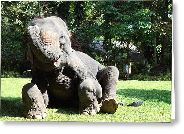 Maesa Elephant Camp - Chiang Mai Thailand - 01131 Greeting Card by DC Photographer
