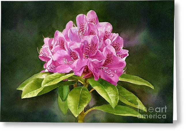 Dark Pink Greeting Cards - Magenta Rhododendron with Background Greeting Card by Sharon Freeman