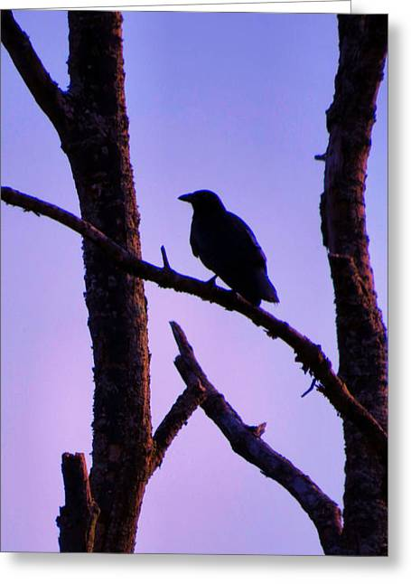 Swallow Nestlings Greeting Cards - Magic Is The Night Greeting Card by Michelle Milano