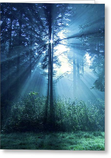 Forests Greeting Cards - Magical Light Greeting Card by Daniel Csoka