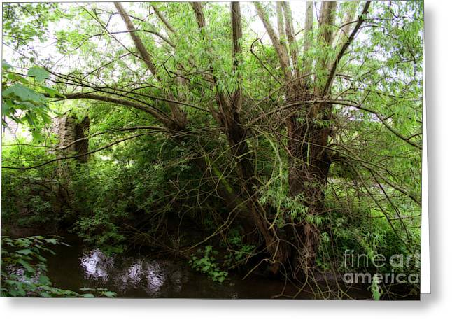 White River Scene Mixed Media Greeting Cards - Magical Tree in Forest Greeting Card by Michael Braham