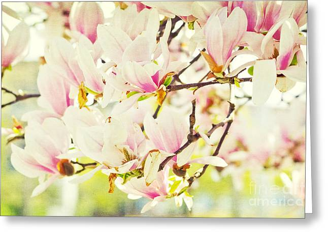 Spring Greeting Cards - Magnolia Greeting Card by Angela Doelling AD DESIGN Photo and PhotoArt