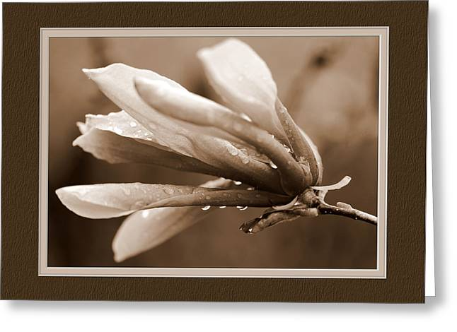 Matting Greeting Cards - Magnolia Greeting Card by Charles Feagans