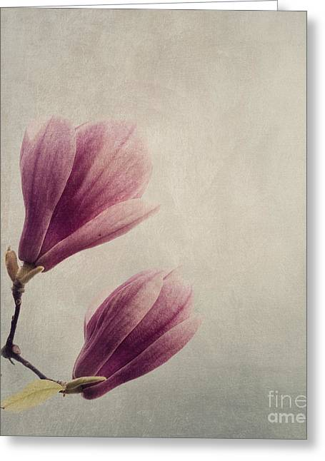 Purples Pyrography Greeting Cards - Magnolia Greeting Card by Jelena Jovanovic