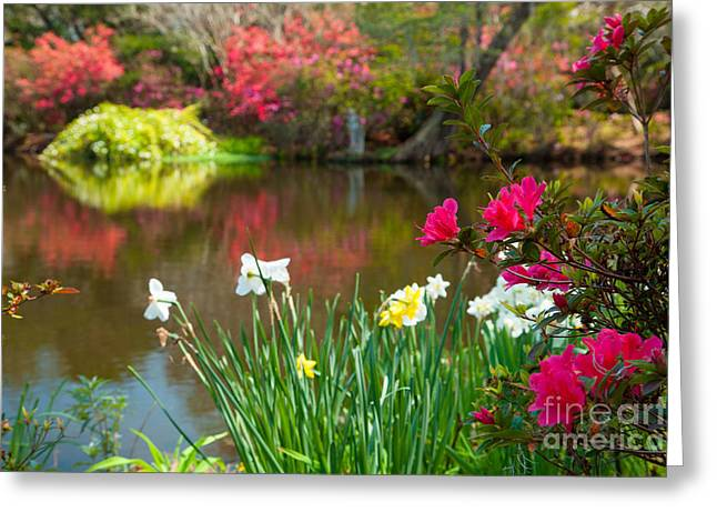 Magnolia Plantation And Gardens Greeting Card by Iris Greenwell