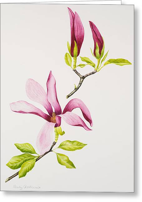 Pink Blossoms Greeting Cards - Magnolia Greeting Card by Sally Crosthwaite