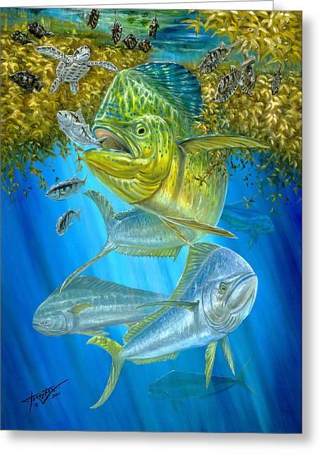 Terry Greeting Cards - Mahi Mahi Hunting In Sargassum Greeting Card by Terry  Fox