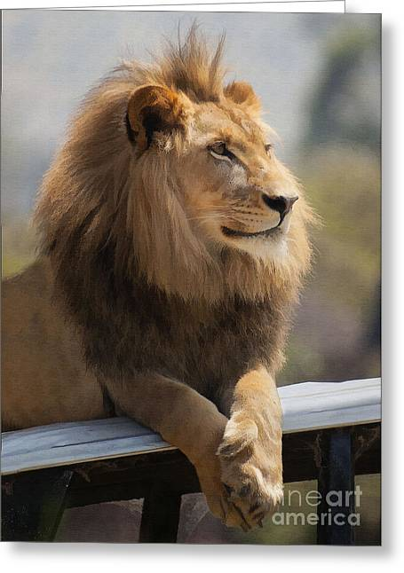 Lion Greeting Cards - Majestic Lion Greeting Card by Sharon Foster