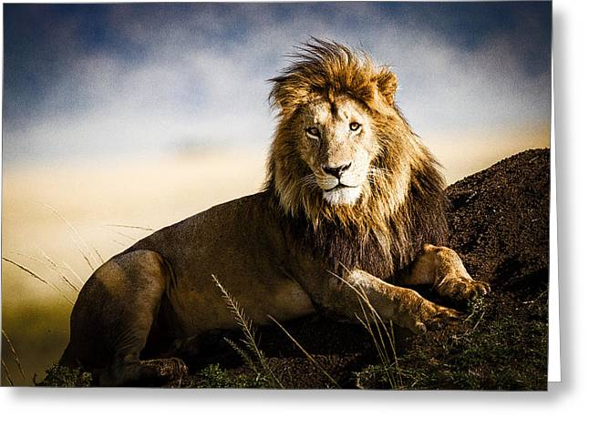 Awe Inspiring Greeting Cards - Majestic Male On Mound Greeting Card by Mike Gaudaur