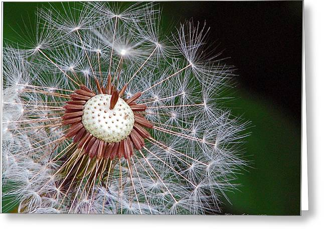 Chris Anderson Photography Greeting Cards - Make a Wish Greeting Card by Chris Anderson