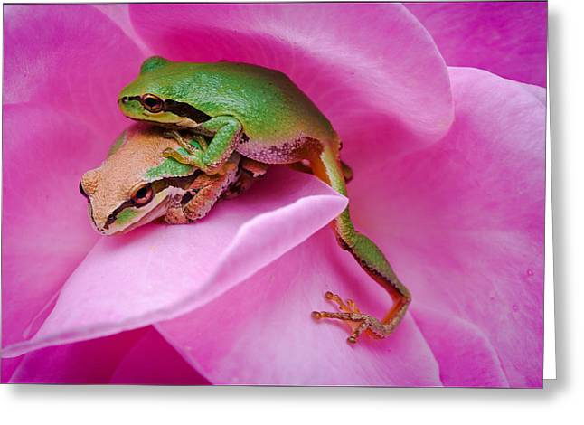 Pacific Tree Frog Greeting Cards - Make Room Greeting Card by Marvin Mast