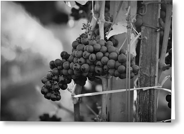 Fruit And Wine Greeting Cards - Makings of a Fine Wine Greeting Card by Mountain Dreams