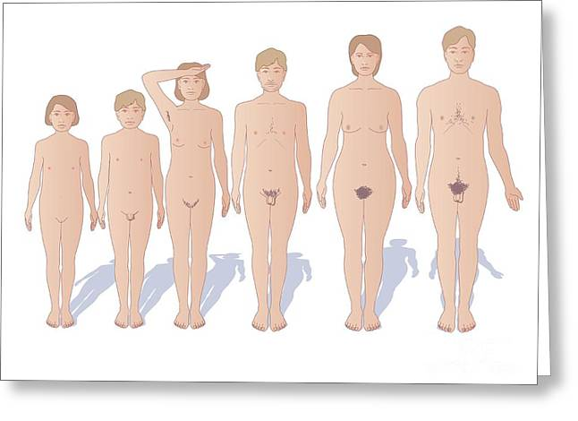 Human Gender Greeting Cards - Male And Female Sexual Maturation Greeting Card by Peter Gardiner