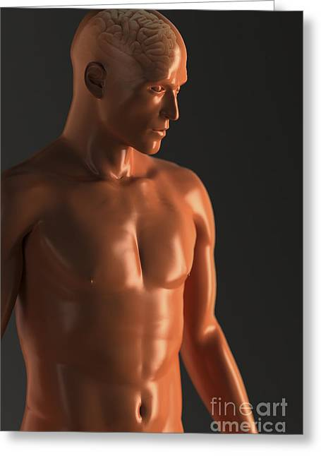 Cerebral Hemisphere Greeting Cards - Male Figure With Brain Greeting Card by Science Picture Co