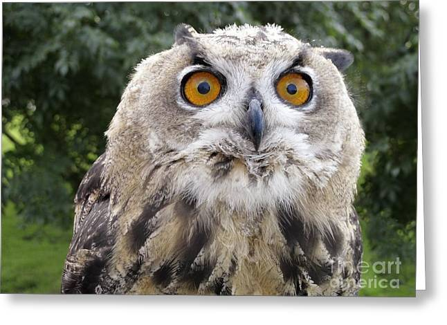 Tufted Ears Greeting Cards - Male Juvenile European Eagle Owl Greeting Card by Power and Syred