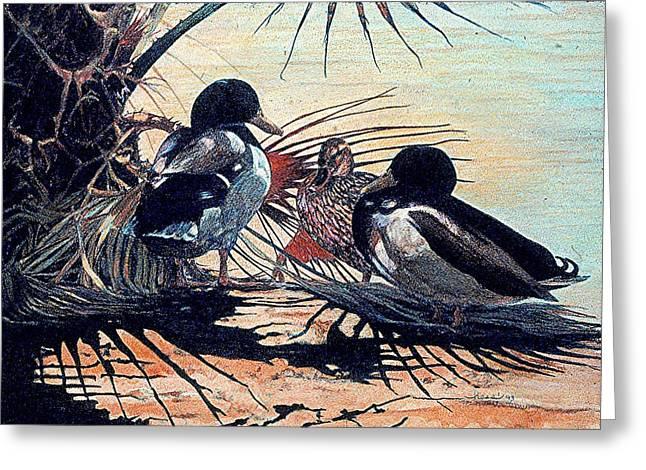 Mallard Drawings Greeting Cards - Mallard Duck Wildlife Greeting Card by Olde Time  Mercantile