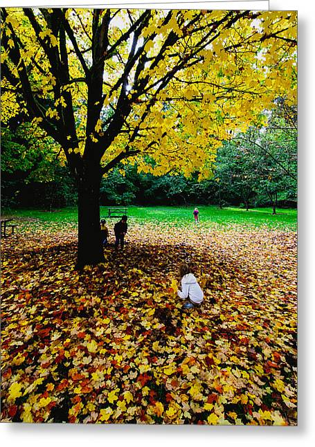 Red Fallen Leave Greeting Cards - Maple tree - Fall color Greeting Card by Hisao Mogi