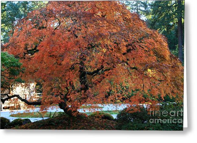 Fall Colors Greeting Cards - Maples Greeting Card by Terry Matysak