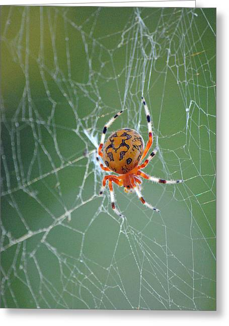 Marbled Orb Weaver Greeting Cards - Marbled Orb Weaver Greeting Card by Carla Mason