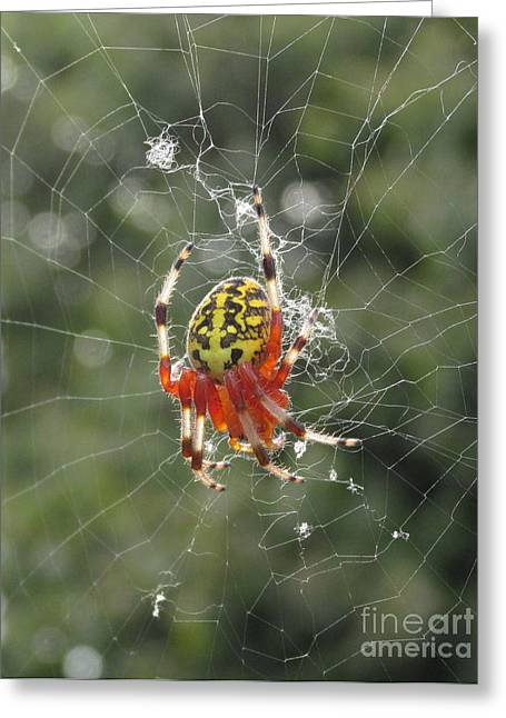 Marbled Orb Weaver Greeting Cards - Marbled Orb Weaver Greeting Card by Joshua Bales