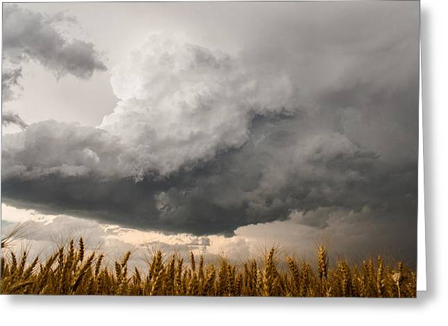 Storm Cloud Art Prints Greeting Cards - Marshmallow Greeting Card by Sean Ramsey