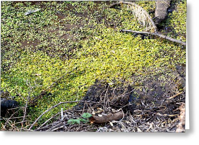 Stagnant Greeting Cards - Marshy Greeting Card by Brent Dolliver