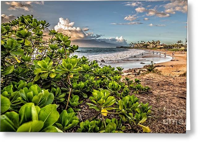 Tropical Scene Greeting Cards - Maui Hawaii Greeting Card by Edward Fielding