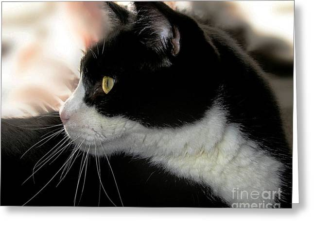 Pictures Of Cats Greeting Cards - Max Greeting Card by Dale   Ford
