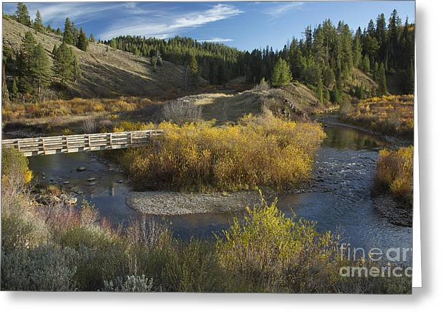 Mccoy Photographs Greeting Cards - McCoy Creek Greeting Card by Idaho Scenic Images Linda Lantzy