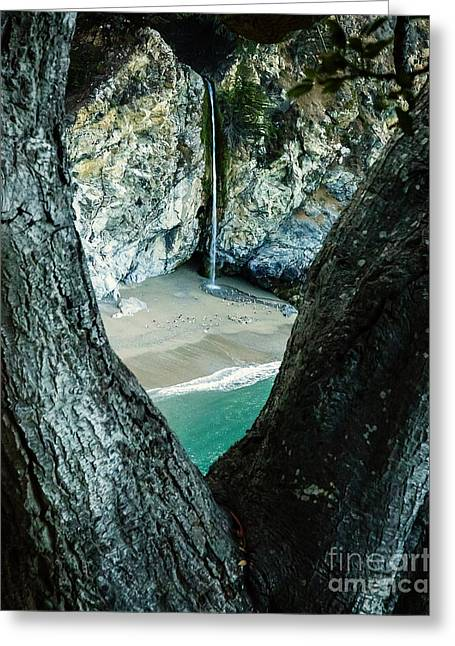 Big Sur Beach Greeting Cards - McWay Falls-Big Sur Greeting Card by David Millenheft