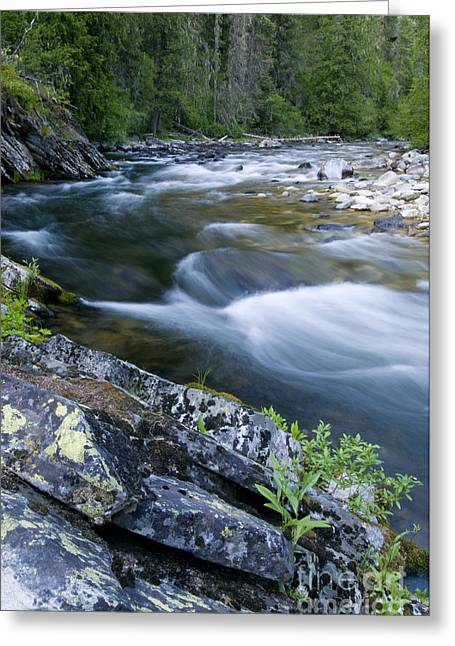 Water Flowing Greeting Cards - Meadow Creek Greeting Card by William H. Mullins