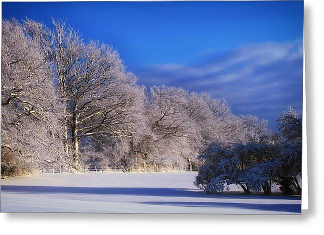 Snow-covered Landscape Greeting Cards - Meadow in Winter Greeting Card by Anja Osenberg