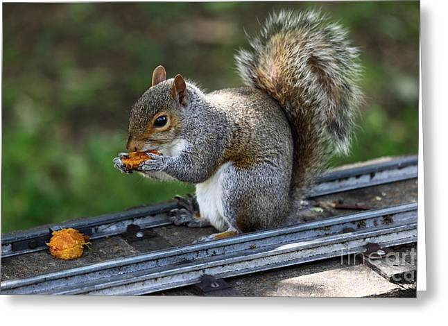 Sciurus Carolinensis Greeting Cards - Meals on Rails Greeting Card by James Brunker