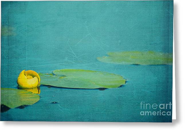 Lilly Pads Greeting Cards - Meditation Greeting Card by Aimelle