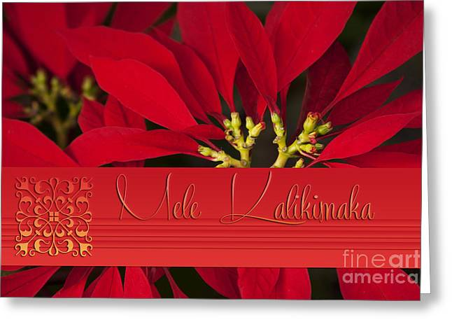 Euphorbiaceae Greeting Cards - Mele Kalikimaka - Poinsettia  - Euphorbia pulcherrima Greeting Card by Sharon Mau