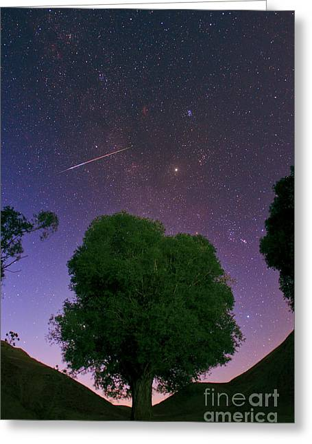Meteor Greeting Cards - Meteor In The Morning Sky Greeting Card by Babak Tafreshi