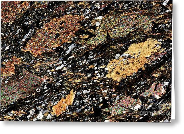 Mica Schist, Thin Section, Polarized Lm Greeting Card by Pasieka