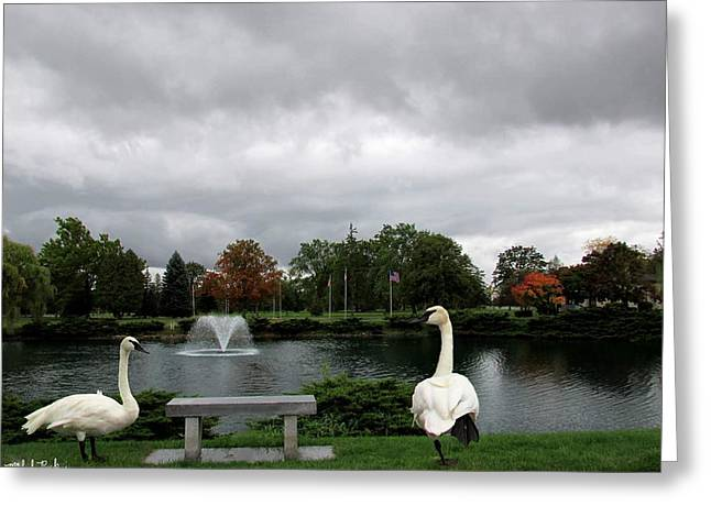 Willow Lake Greeting Cards - Michigan Memorial Park Greeting Card by Michael Rucker