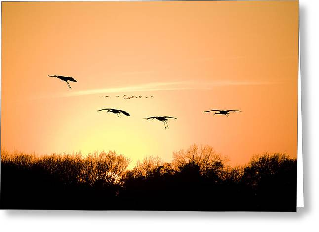 Indiana Autumn Greeting Cards - Migration Greeting Card by Alexey Stiop