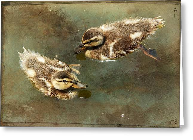 Ducklings Greeting Cards - Mini Quackers Greeting Card by Fraida Gutovich