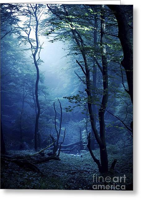 Emergence Greeting Cards - Misty, Dark Forest, Liselund Slotspark Greeting Card by Evgeny Kuklev