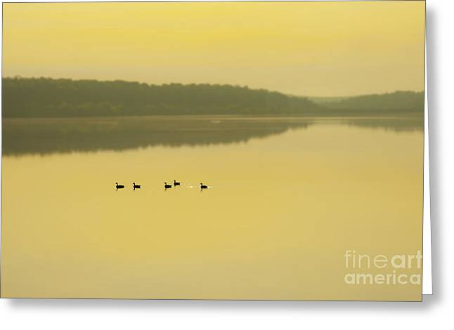 Foggy Beach Greeting Cards - Misty Lake Greeting Card by Svetlana Sewell