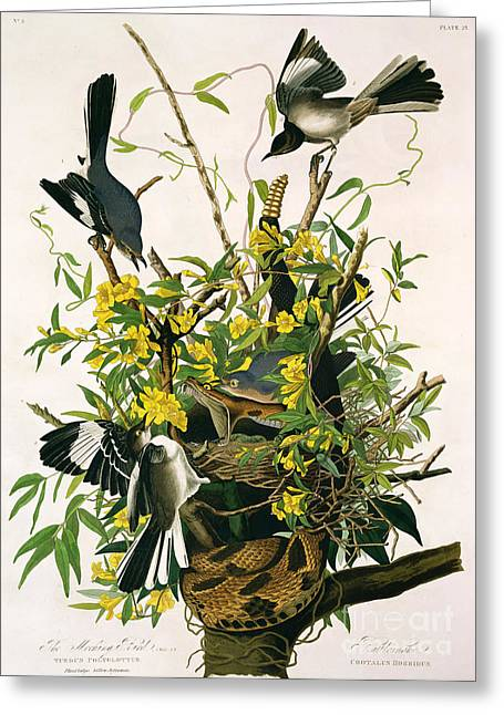 Fangs Greeting Cards - Mocking Birds and Rattlesnake Greeting Card by John James Audubon