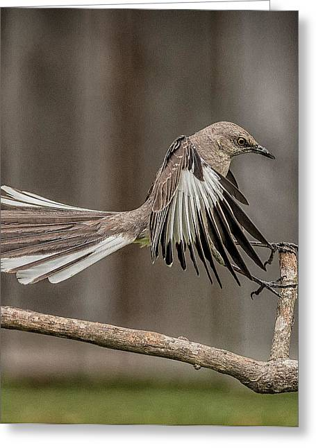 Mockingbird  Greeting Card by Rick Barnard