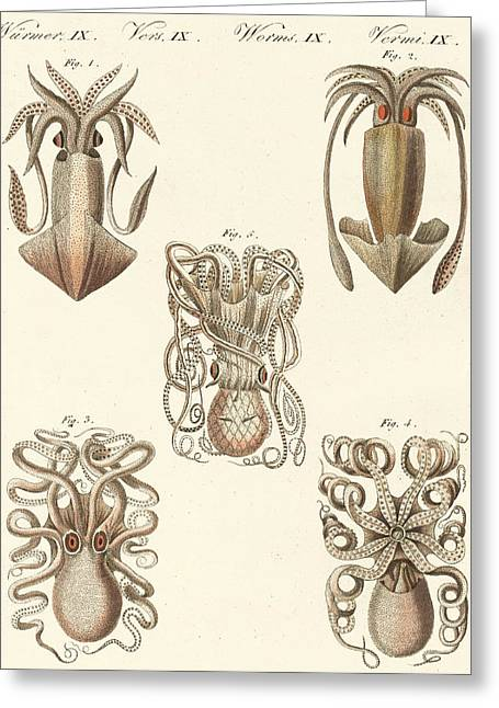 Soft Drawings Greeting Cards - Molluscs or soft worms Greeting Card by German School