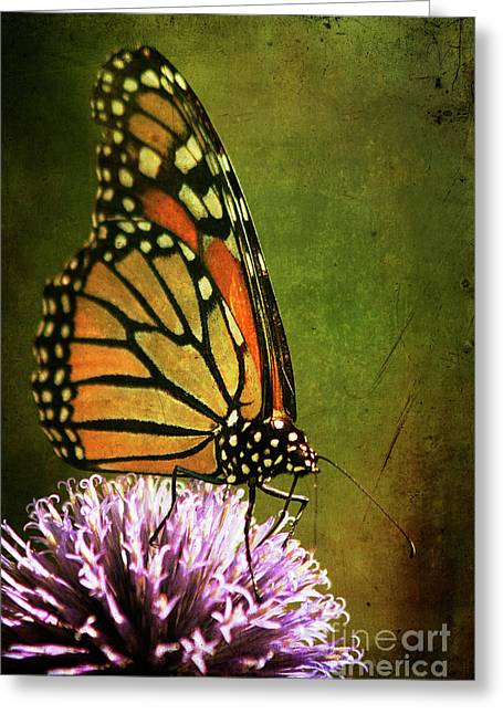 Danaus Plexippus Greeting Cards - Monarch Greeting Card by Cindi Ressler