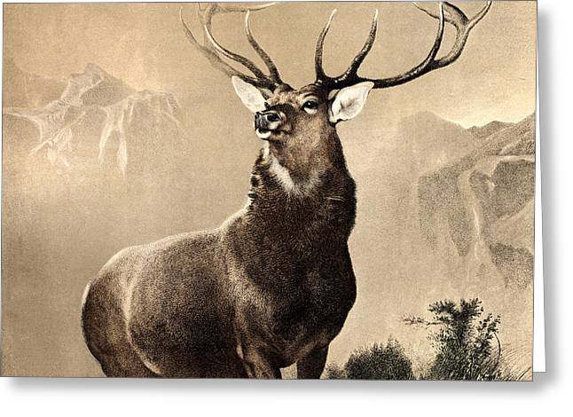 Rudolph Paintings Greeting Cards - Monarch of the Glen Greeting Card by Celestial Images