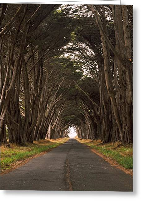 Marin County Greeting Cards - Monterey Cypress Tree Tunnel Greeting Card by Panoramic Images